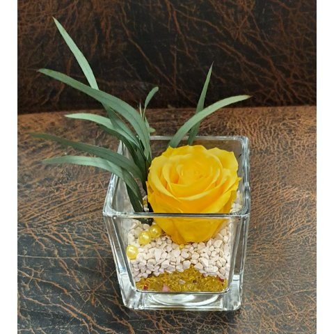 Rose Eternelle cube, couleur Jaune