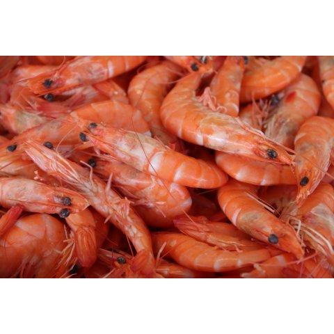 Crevettes Roses Cuites Bio 40/60
